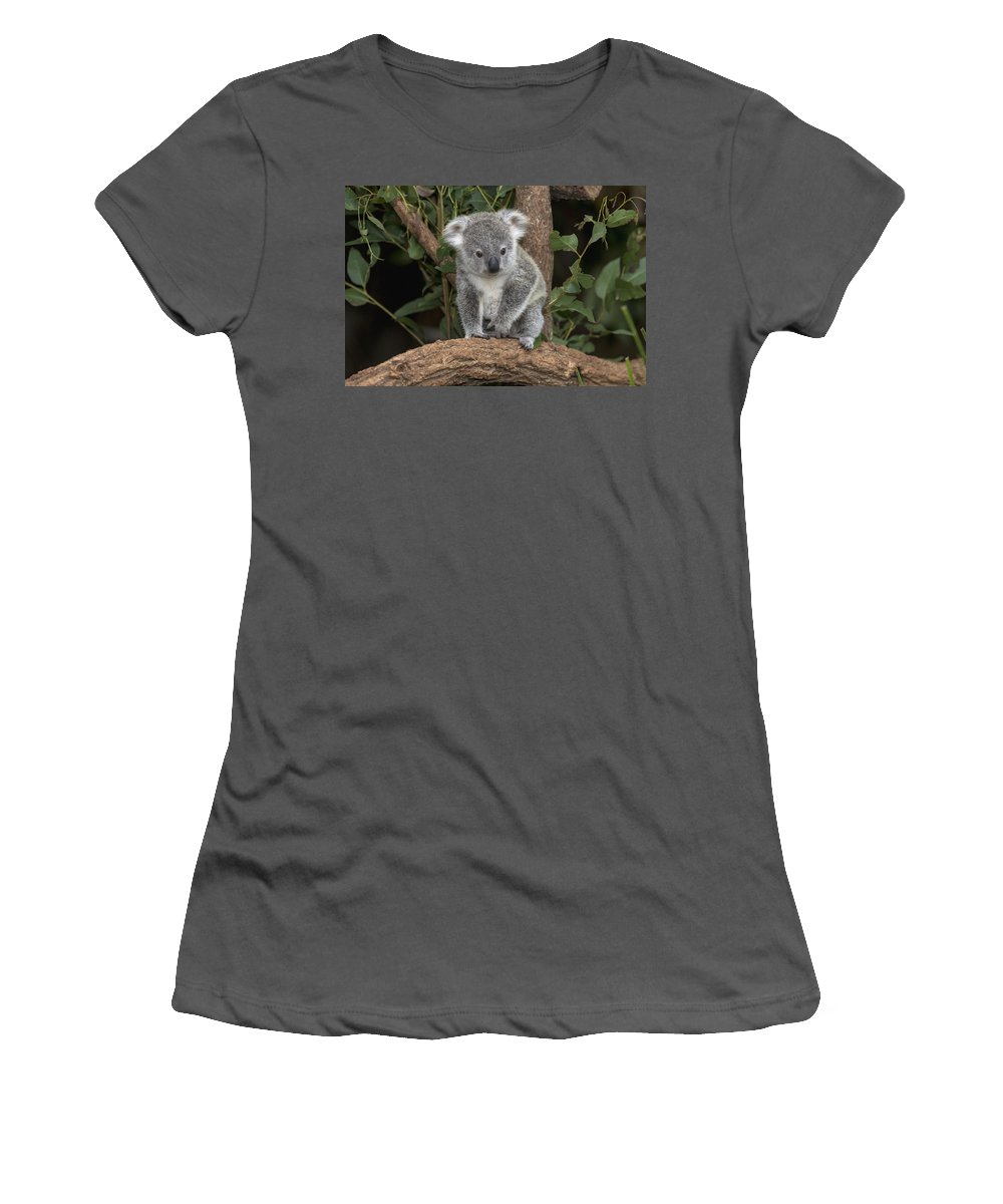 Feb0514 Women's T-Shirt (Athletic Fit) featuring the photograph Queensland Koala Juvenile Australia by San Diego Zoo