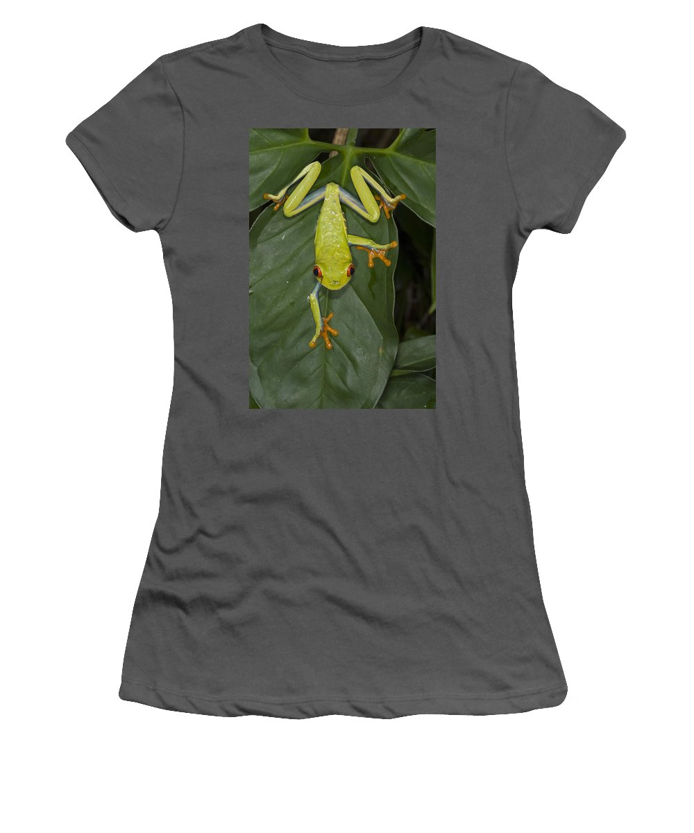 Feb0514 Women's T-Shirt (Athletic Fit) featuring the photograph Red-eyed Tree Frog Costa Rica by Suzi Eszterhas
