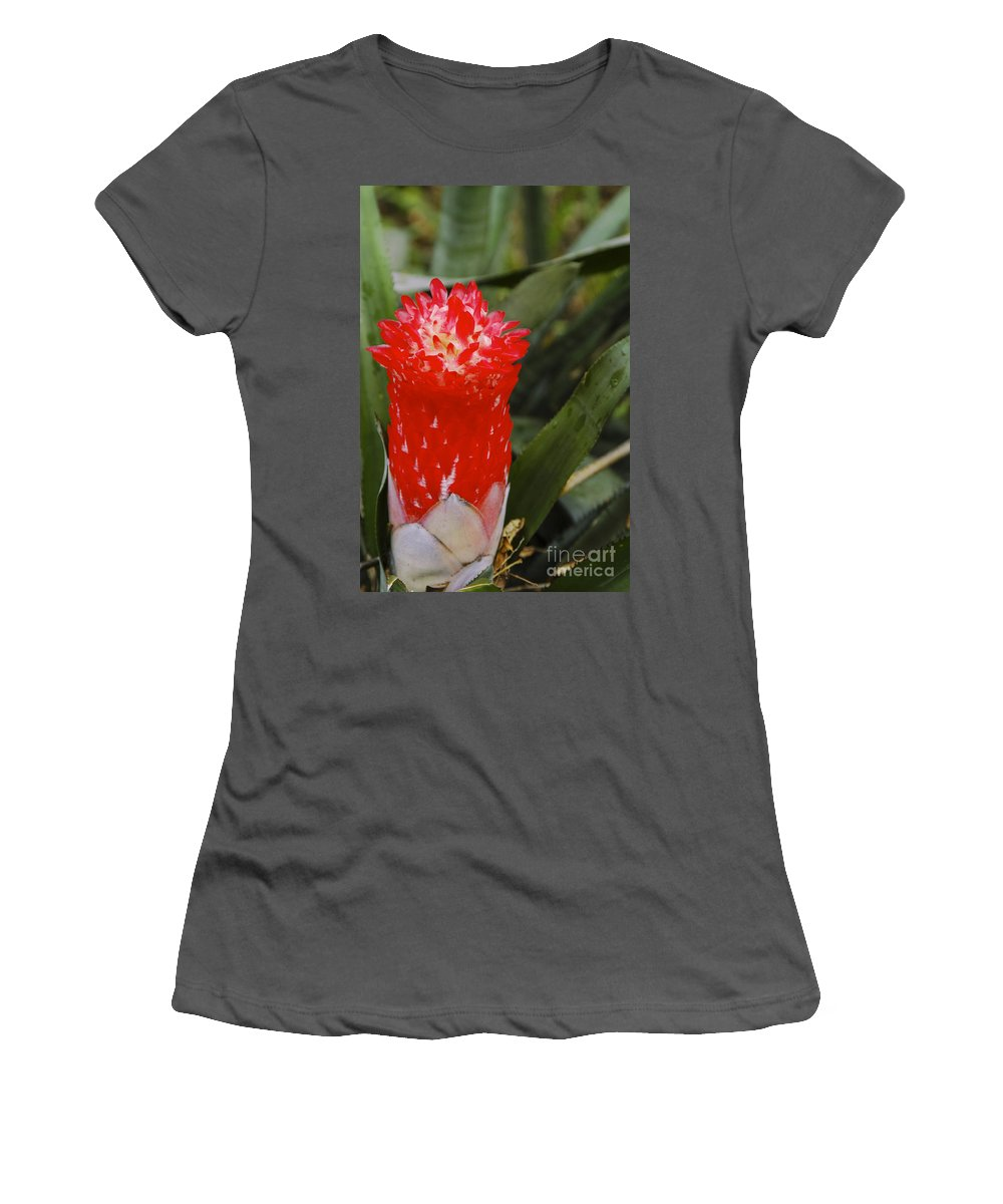 Else Kientzler Botanical Garden Sarchi Costa Rica Ginger Plant Plants Bloom Blooms Flower Flowers Gardens Flower Flowers Blossom Blossoms Leaf Leaves Still Life Nature Women's T-Shirt (Athletic Fit) featuring the photograph Red Ginger by Bob Phillips