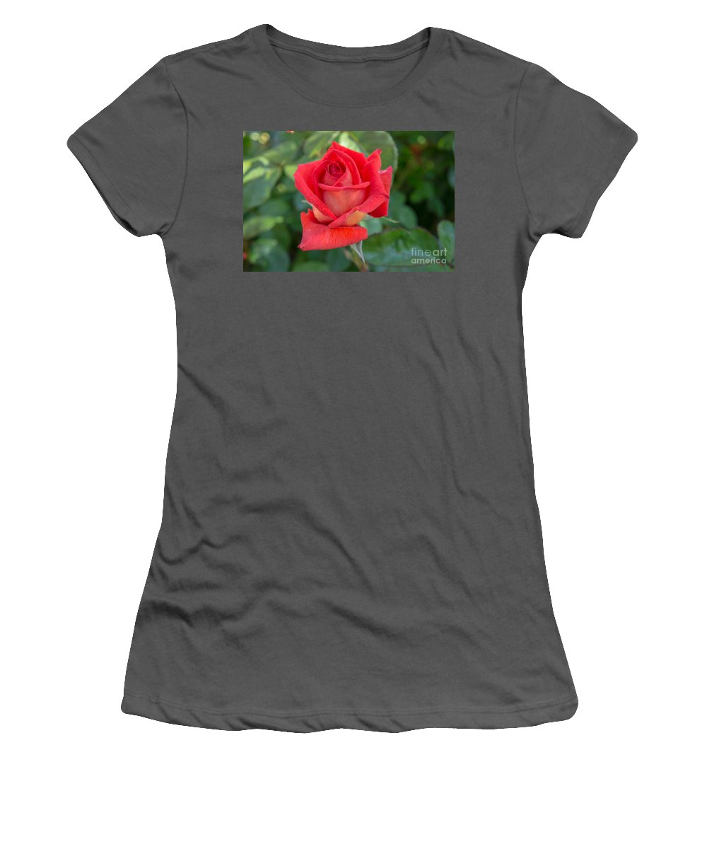 Rose Women's T-Shirt (Athletic Fit) featuring the photograph Red Rose by Diana Weir