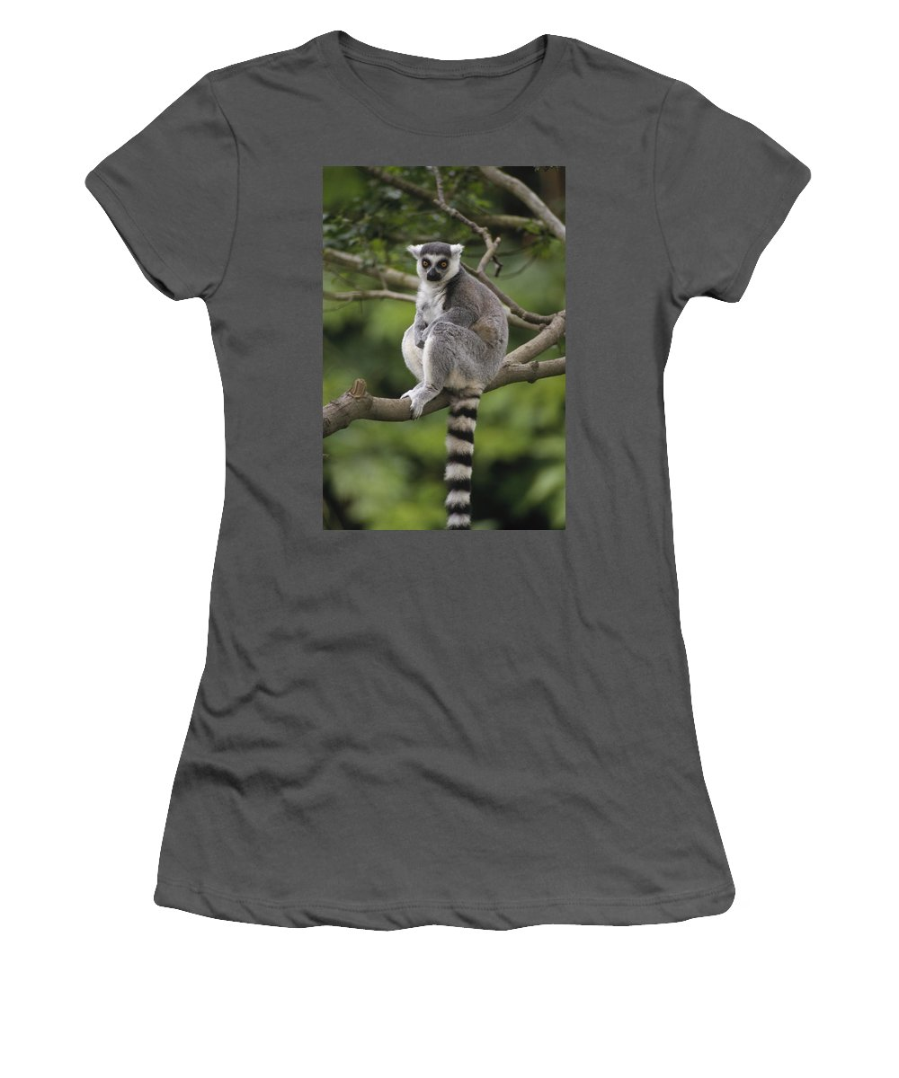 Feb0514 Women's T-Shirt (Athletic Fit) featuring the photograph Ring-tailed Lemur Sitting Madagascar by Gerry Ellis