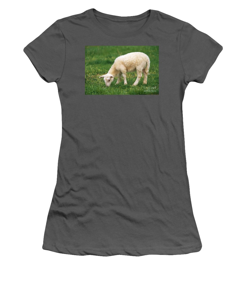 Animal Women's T-Shirt (Athletic Fit) featuring the photograph Sheep by David N. Davis