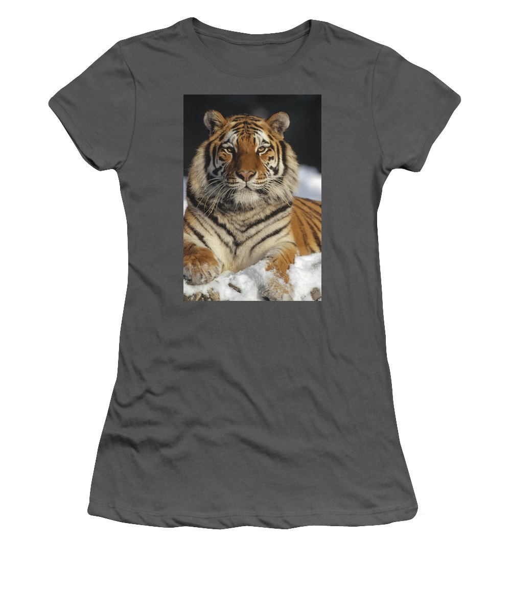 Feb0514 Women's T-Shirt (Athletic Fit) featuring the photograph Siberian Tiger Portrait In Snow China by Konrad Wothe