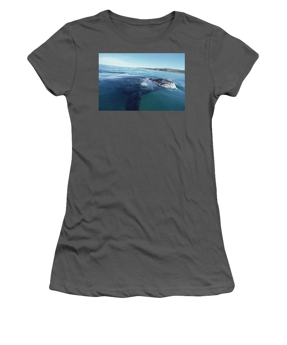 Feb0514 Women's T-Shirt (Athletic Fit) featuring the photograph Southern Right Whale At Surface by Flip Nicklin