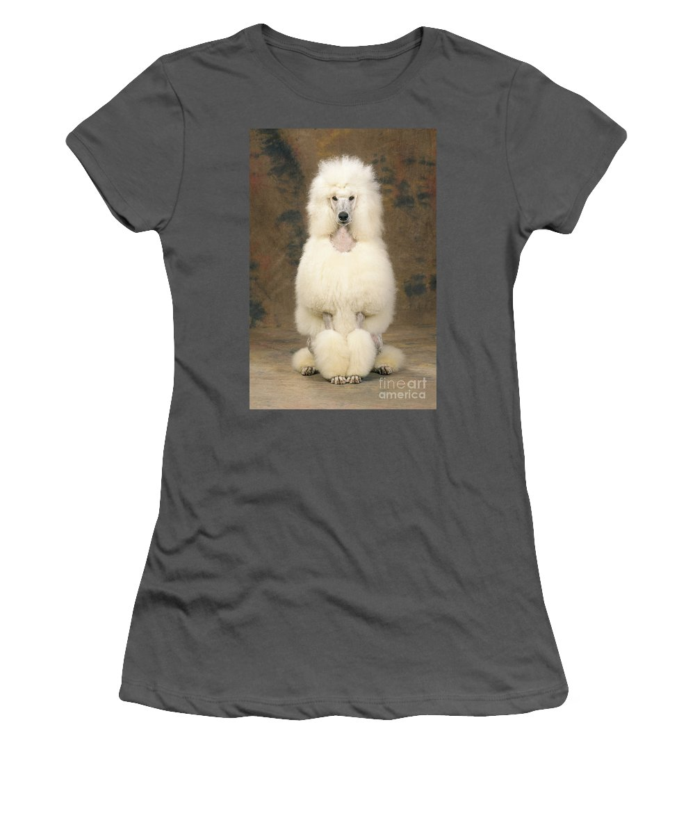 Standard Poodle Women's T-Shirt (Athletic Fit) featuring the photograph Standard Poodle Dog by John Daniels