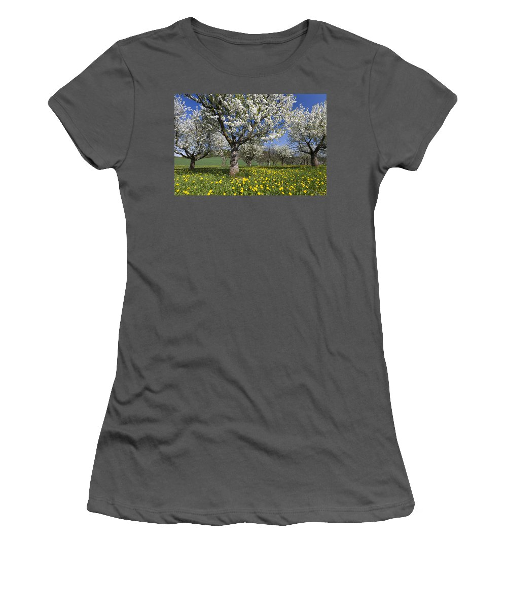 Feb0514 Women's T-Shirt (Athletic Fit) featuring the photograph Sweet Cherry Orchard In Full Bloom by Duncan Usher