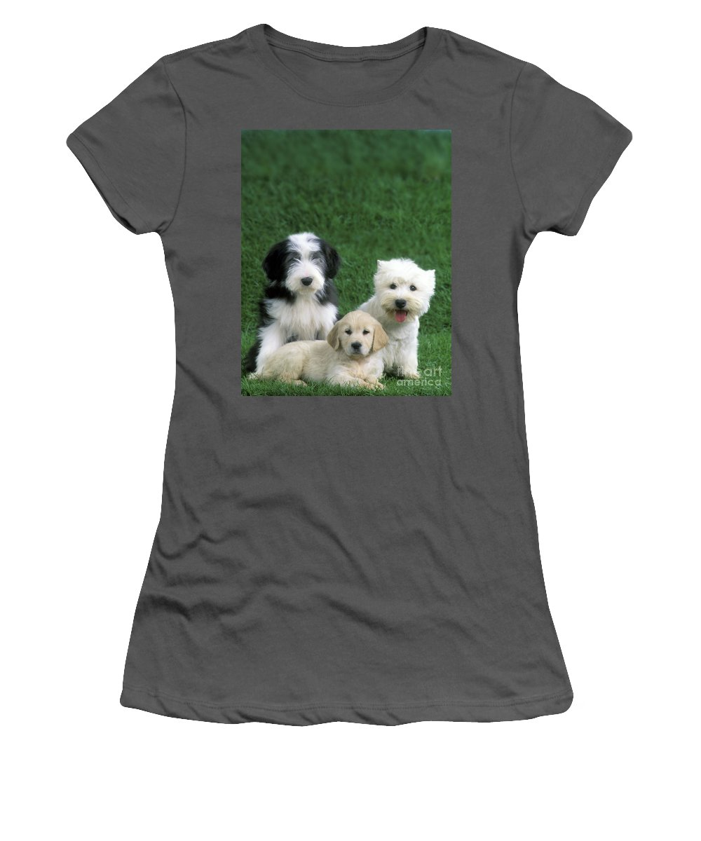 Dogs Women's T-Shirt (Athletic Fit) featuring the photograph Three Diffferent Puppies by Jean-Michel Labat