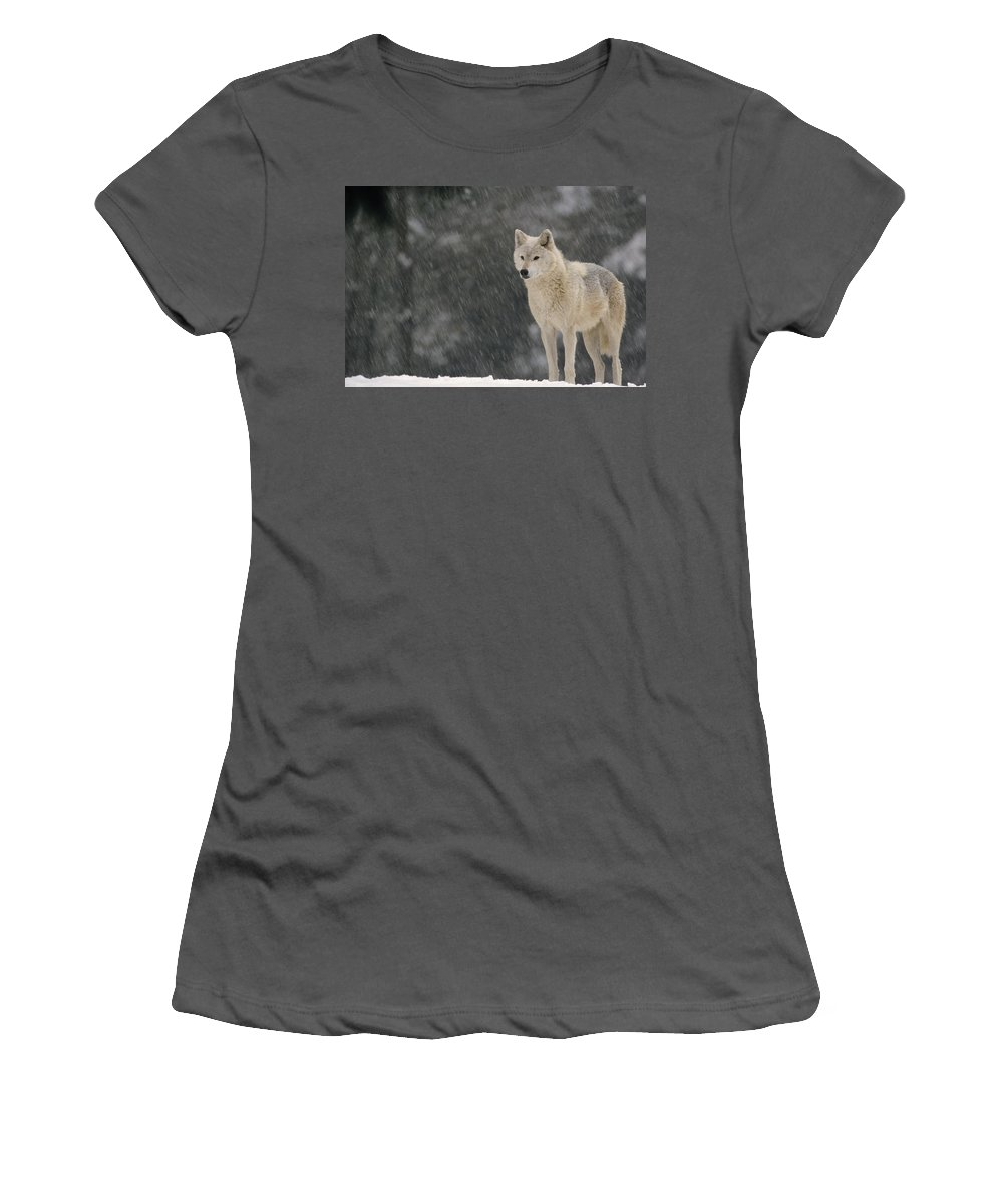 Feb0514 Women's T-Shirt (Athletic Fit) featuring the photograph Timber Wolf Female North America by Gerry Ellis