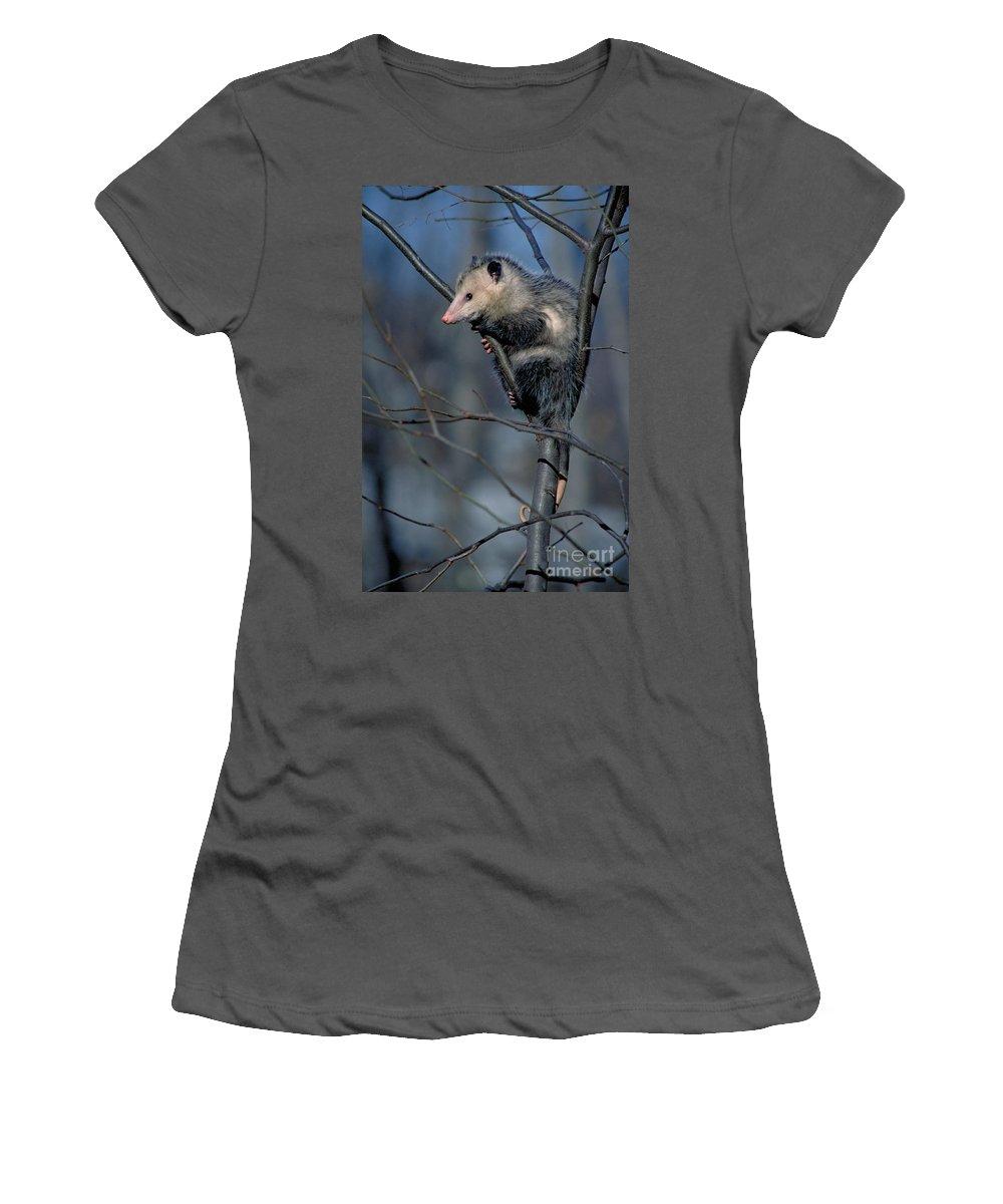 Virginia Opossum Women's T-Shirt (Athletic Fit) featuring the photograph Virginia Opossum by David N. Davis