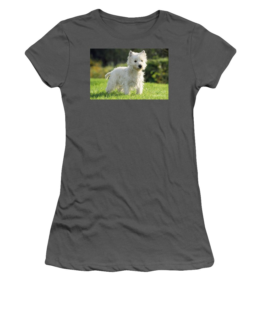 West Highland White Terrier Women's T-Shirt (Athletic Fit) featuring the photograph West Highland White Terrier by Johan De Meester