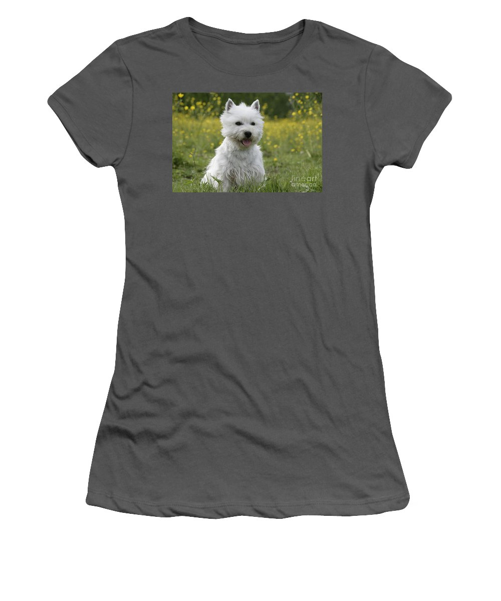 West Highland White Terrier Women's T-Shirt (Athletic Fit) featuring the photograph West Highland White Terrier by Rolf Kopfle