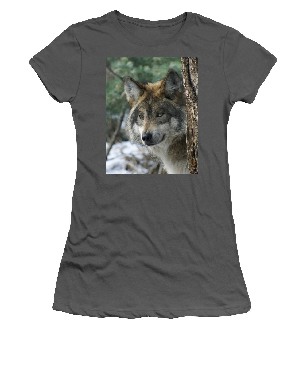 Wolf Women's T-Shirt (Athletic Fit) featuring the photograph Wolf Upclose by Ernie Echols