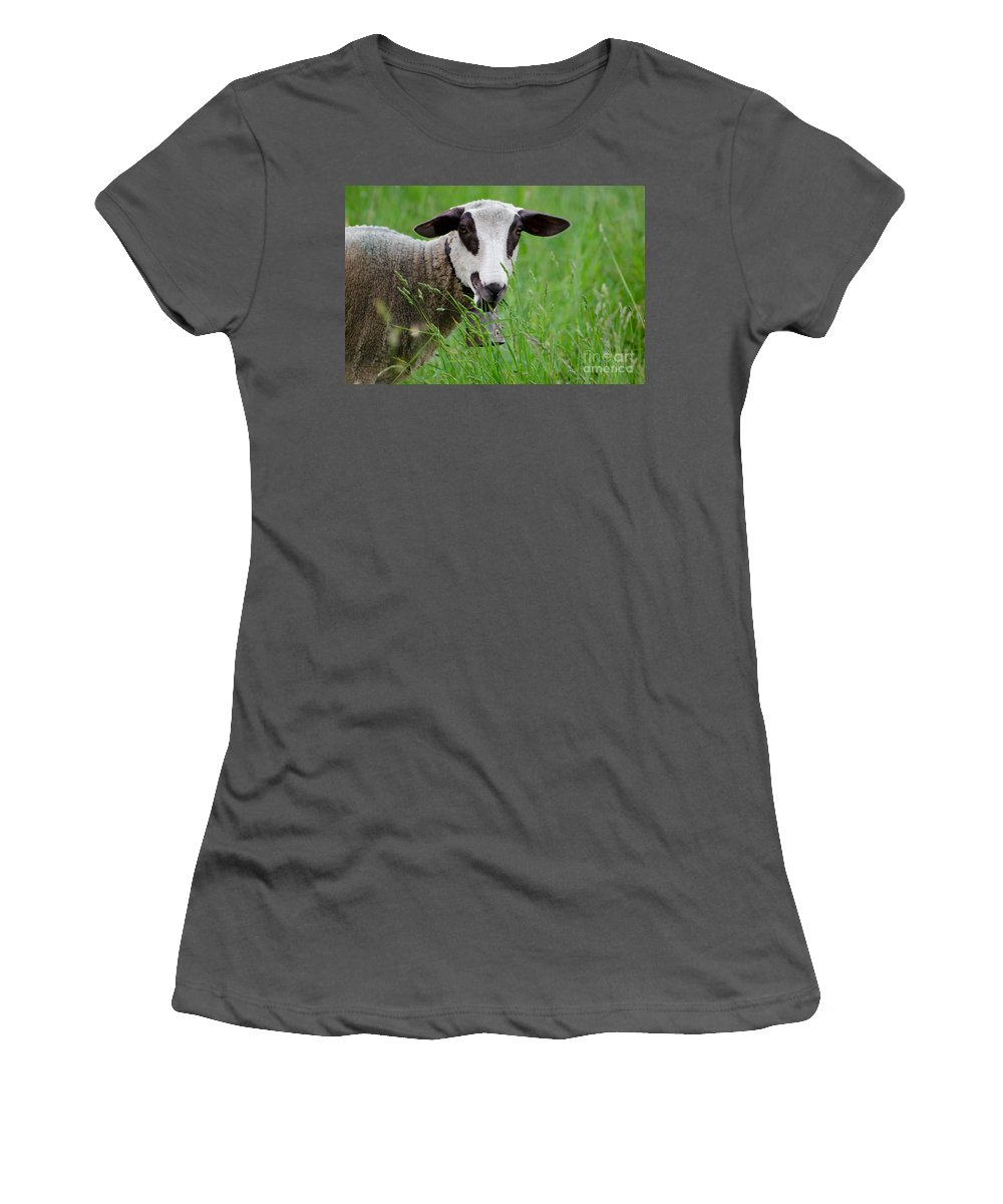 Sheep Women's T-Shirt (Athletic Fit) featuring the photograph Brown And White Sheep by Mats Silvan