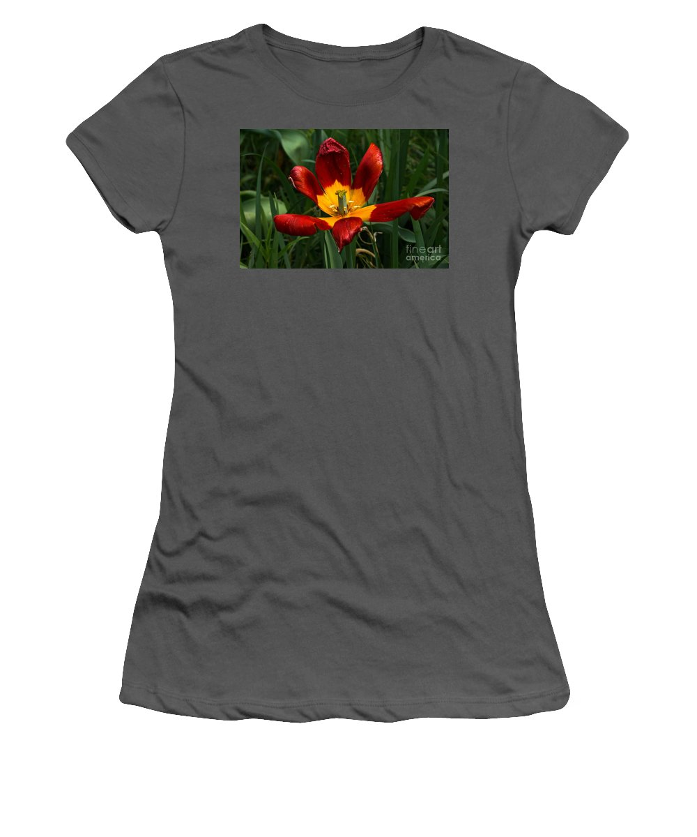 Red And Yellow Open Flower Women's T-Shirt (Athletic Fit) featuring the photograph Glorious Surrender by Byron Varvarigos