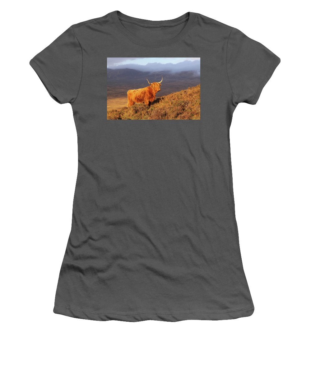 Highland Women's T-Shirt (Athletic Fit) featuring the photograph Highland Cattle Landscape by Bruce J Robinson