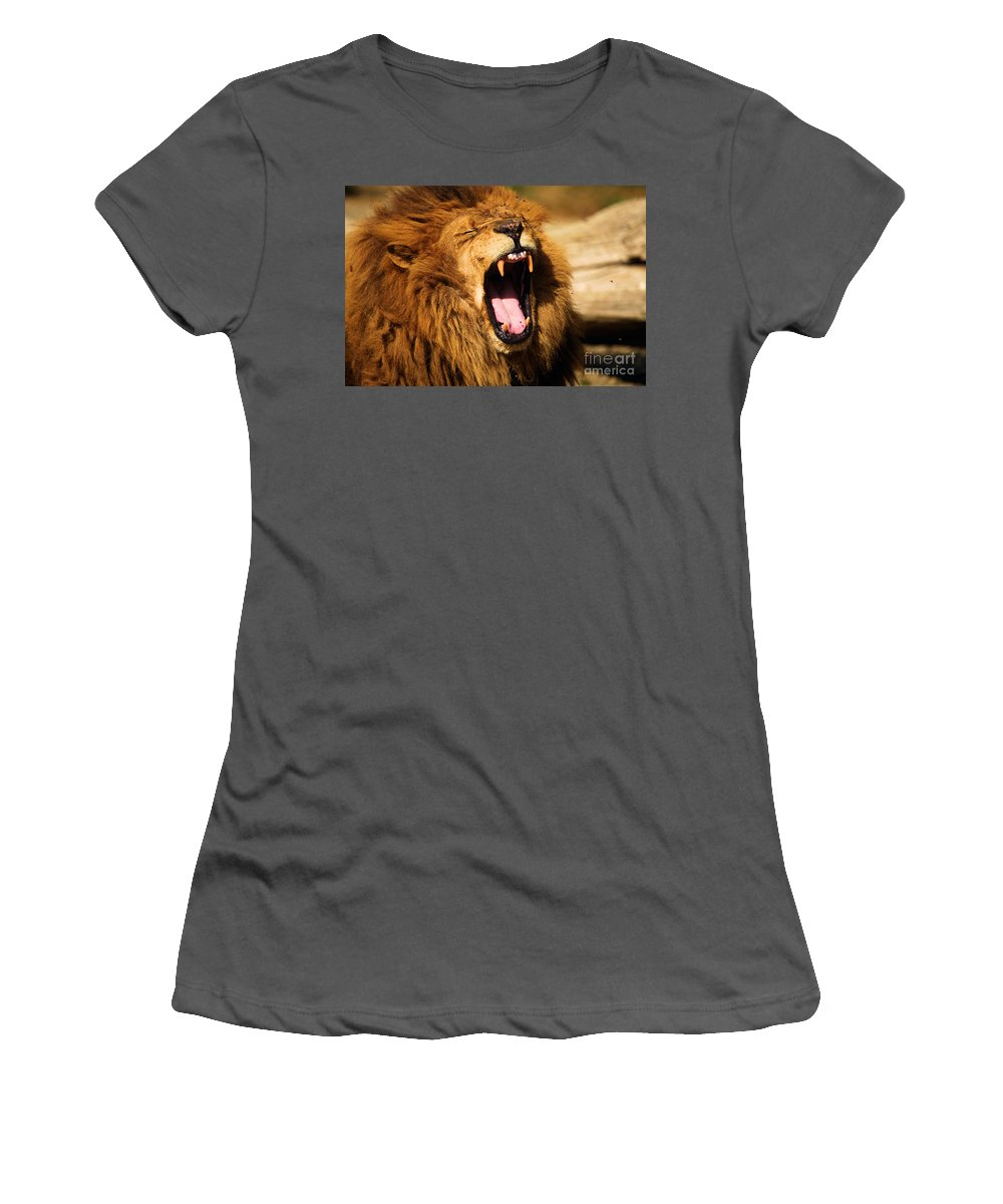 Lion Women's T-Shirt (Athletic Fit) featuring the photograph Nap Time by Adam Jewell