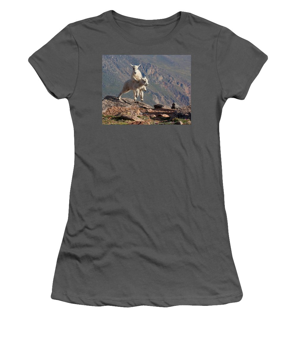 Mountain Goats; Posing; Group Photo; Baby Goat; Nature; Colorado; Crowd; Baby Goat; Mountain Goat Baby; Happy; Joy; Nature; Brothers Women's T-Shirt (Athletic Fit) featuring the photograph Playtime On The Brink by Jim Garrison