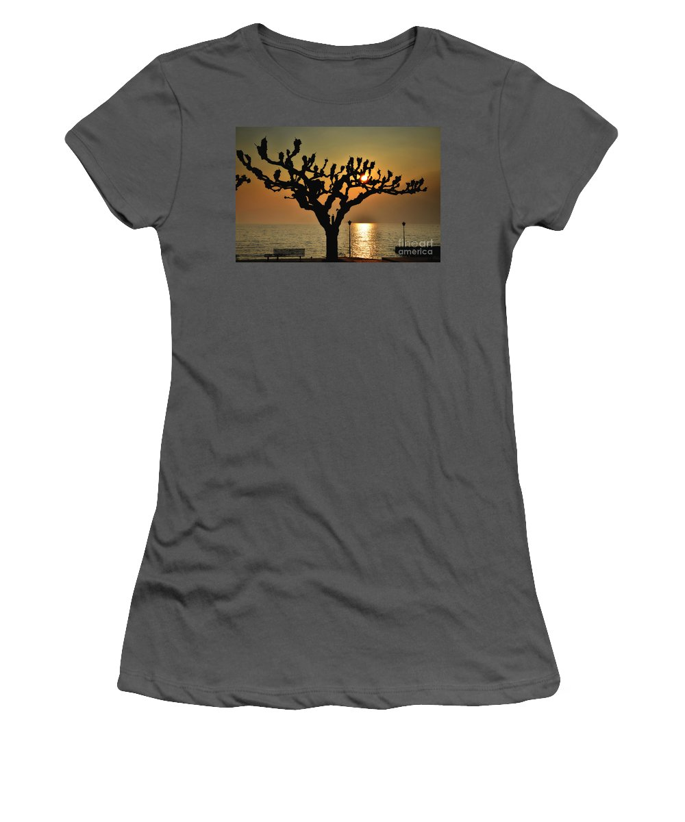 Tree Women's T-Shirt (Athletic Fit) featuring the photograph Sunlight And Tree by Mats Silvan