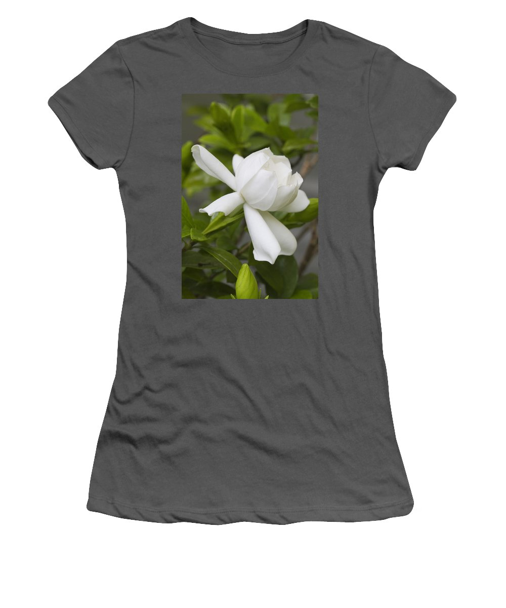 Gardenia Jasminoides Women's T-Shirt (Athletic Fit) featuring the photograph Sweet Sweet Gardenia by Kathy Clark