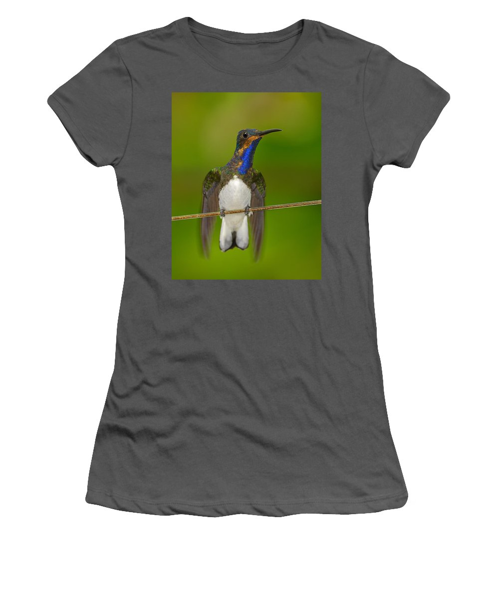 White-necked Jacobin Women's T-Shirt (Athletic Fit) featuring the photograph White-necked Jacobin by Tony Beck
