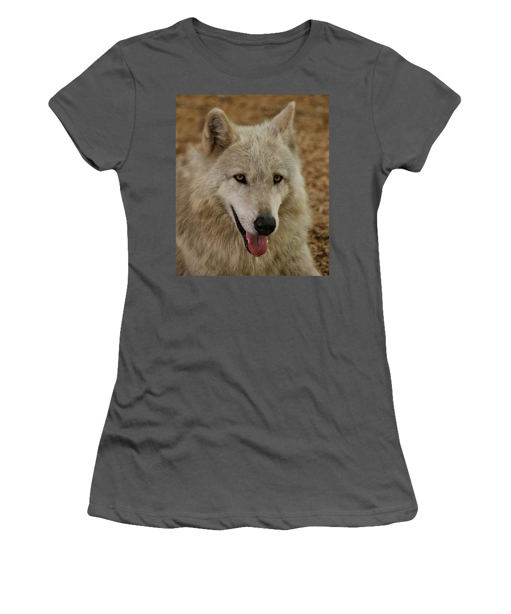 Wolf Women's T-Shirt (Athletic Fit) featuring the photograph Wolf by Sandy Keeton
