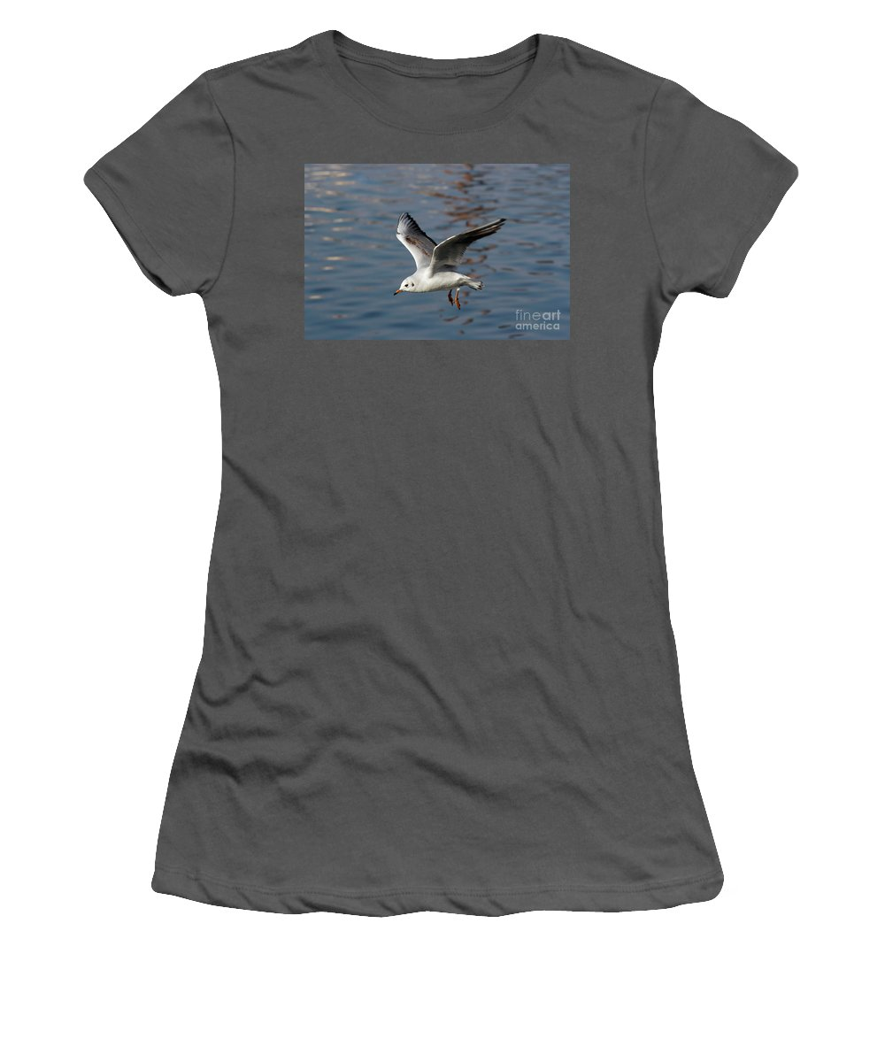 Animal Women's T-Shirt (Athletic Fit) featuring the photograph Flying Gull by Michal Boubin