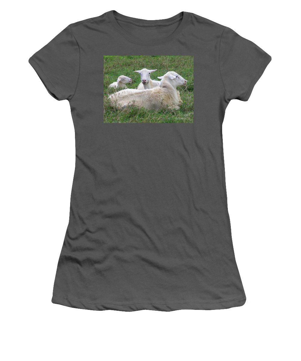 White Animals Women's T-Shirt (Athletic Fit) featuring the photograph Goat Family by Mary Deal