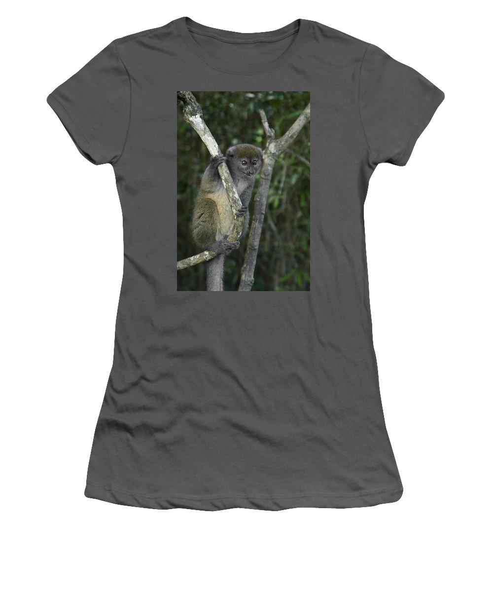 Madagascar Women's T-Shirt (Athletic Fit) featuring the photograph Gray Bamboo Lemur by Michele Burgess
