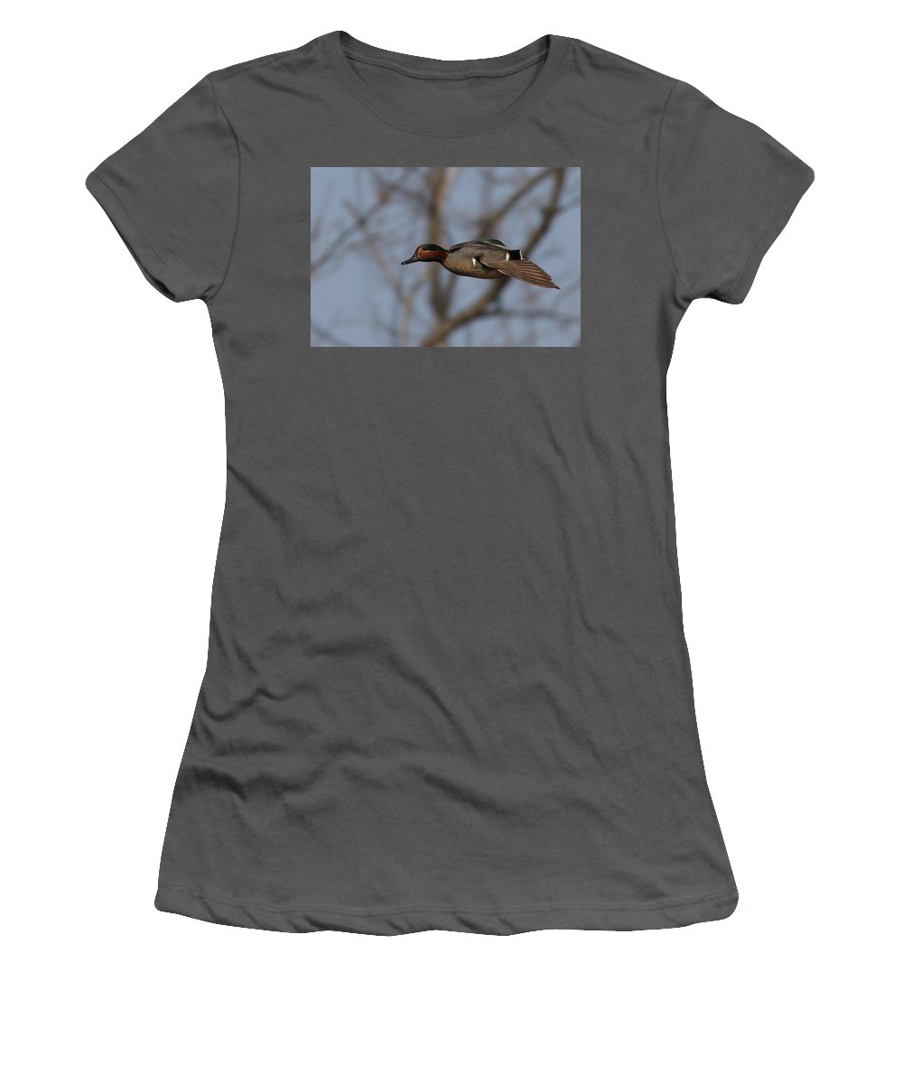 Fly Women's T-Shirt (Athletic Fit) featuring the photograph Green-winged Teal Flies Over by Mark Wallner