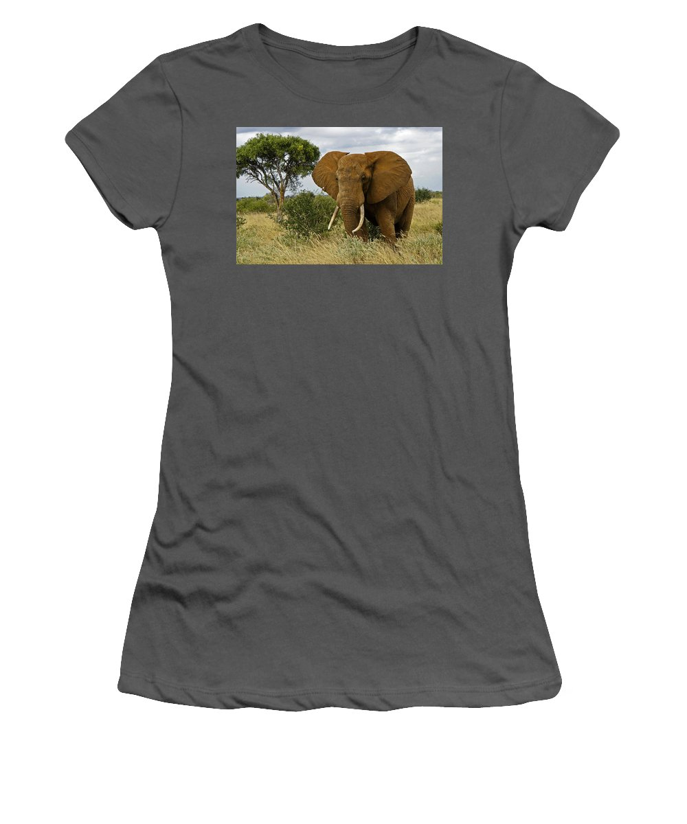 Africa Women's T-Shirt (Athletic Fit) featuring the photograph The Old Bull by Michele Burgess