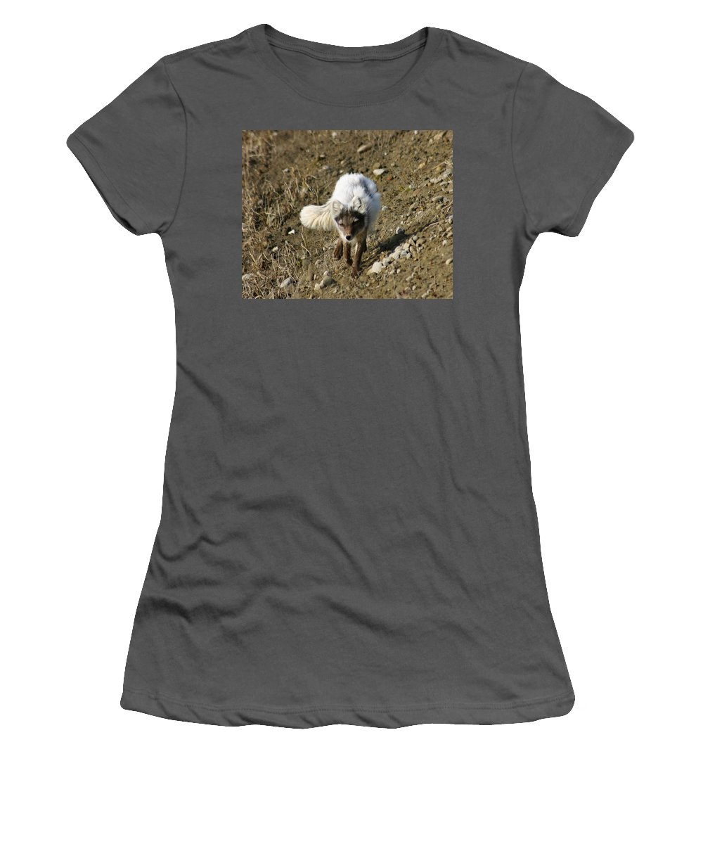 Arctic Fox Women's T-Shirt (Athletic Fit) featuring the photograph Arctic Fox by Anthony Jones