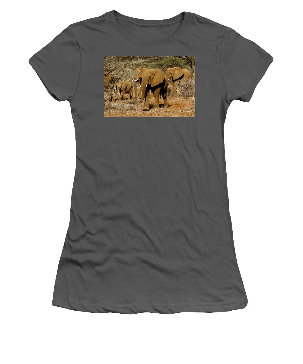 Africa Women's T-Shirt (Athletic Fit) featuring the photograph Elephant Parade by Michele Burgess
