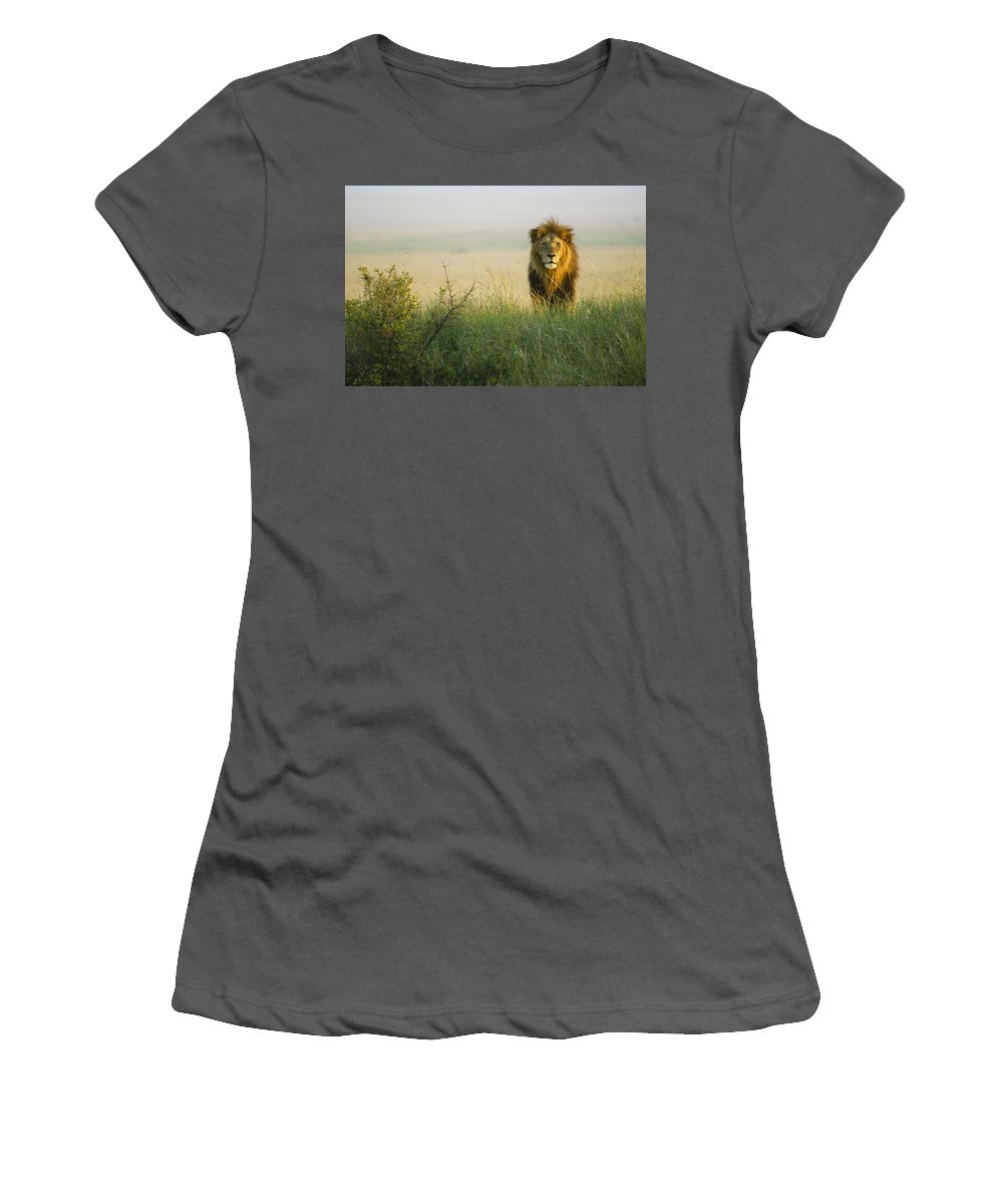 Lion Women's T-Shirt (Athletic Fit) featuring the photograph King Of The Savanna by Michele Burgess
