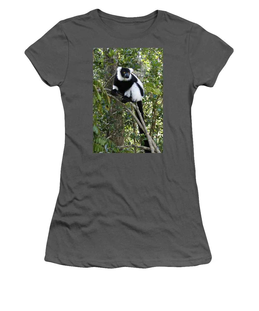 Madagascar Women's T-Shirt (Athletic Fit) featuring the photograph Black And White Ruffed Lemur by Michele Burgess