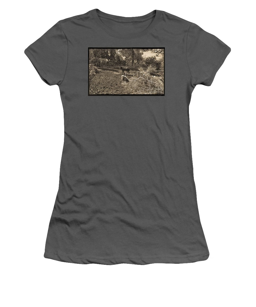 Horse Women's T-Shirt (Athletic Fit) featuring the photograph A Horse In The Field by Madeline Ellis
