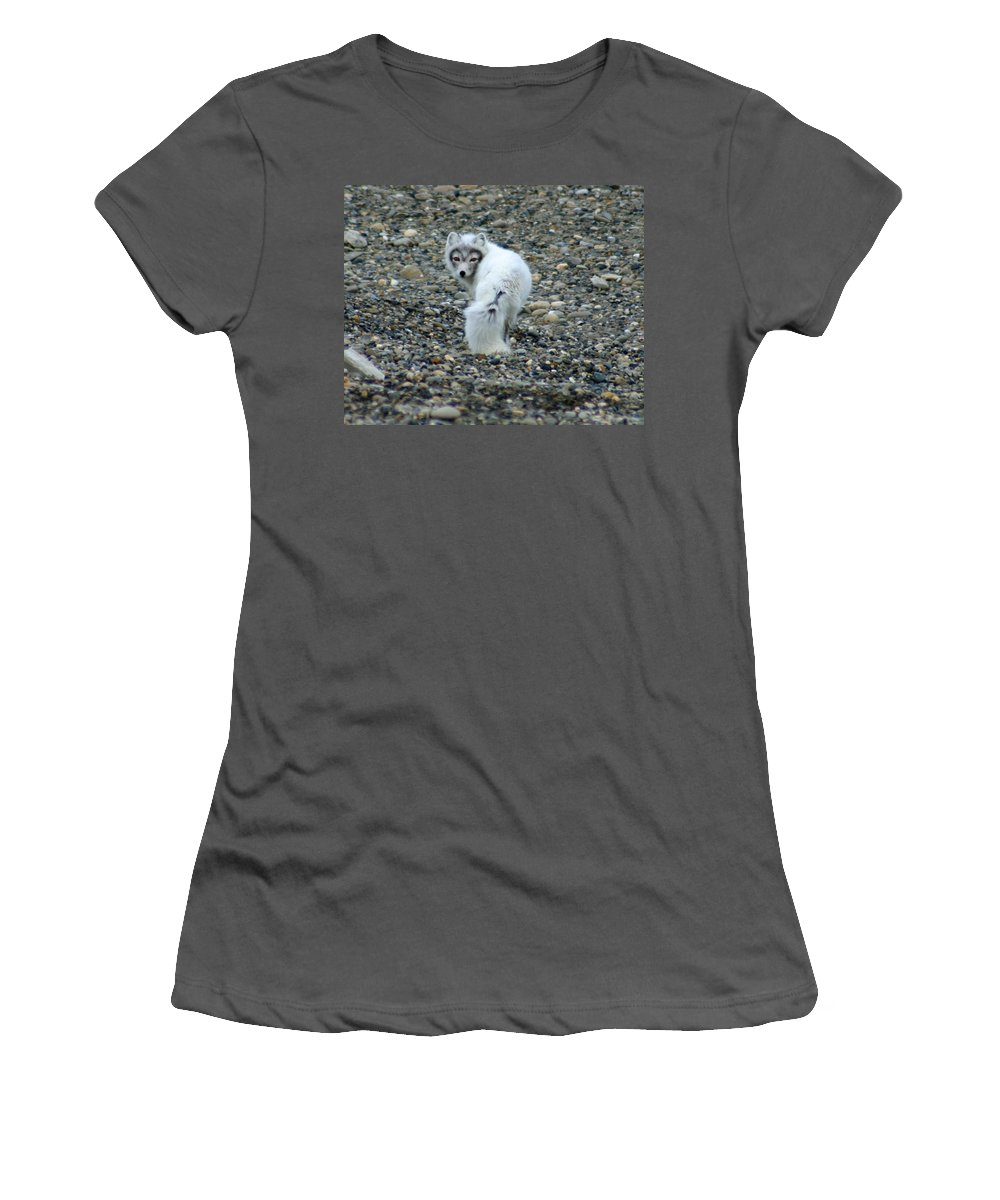 Alaska Women's T-Shirt (Athletic Fit) featuring the photograph Arctic Fox by Anthony Jones