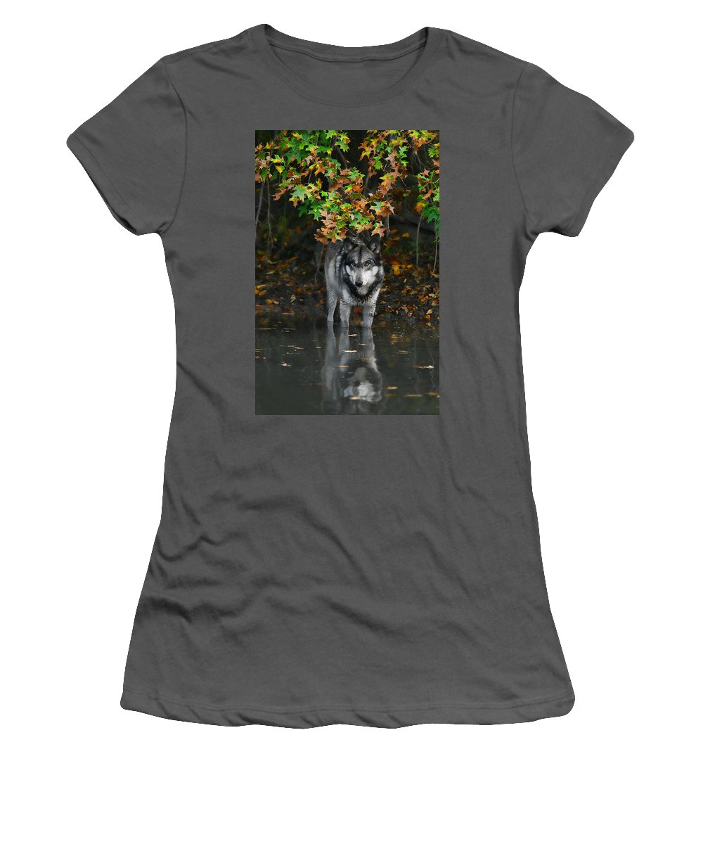 Wolf Wolves Lupine Canis Lupus Wildlife Animal Photography Photograph Women's T-Shirt (Athletic Fit) featuring the photograph Autumn Wolf by Shari Jardina