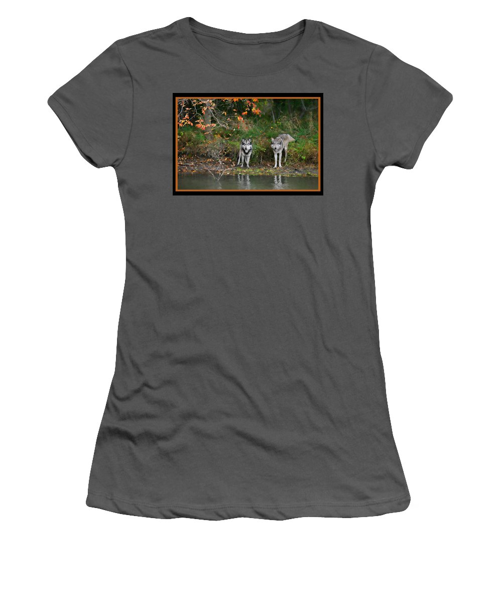 Wolf Wolves Canid Canus Lupis Animal Wildlife Mammal Mates Photograph Photography Autumn Fall Orange Water Pond Women's T-Shirt (Athletic Fit) featuring the photograph Autumn Wolf Study by Shari Jardina