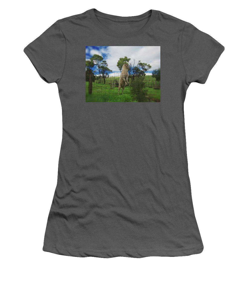 Billy Goat Women's T-Shirt (Athletic Fit) featuring the photograph Billy Goat At The Lookout Post by Douglas Barnard