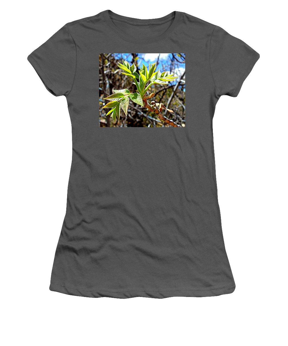 Black Walnut Women's T-Shirt (Athletic Fit) featuring the photograph Black Walnut Spring by Jim Thomas