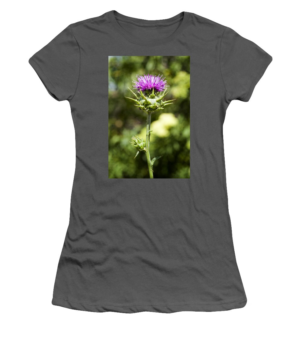 Artichoke Thistle Women's T-Shirt (Athletic Fit) featuring the photograph Bold Artichoke Thistle by Kelley King