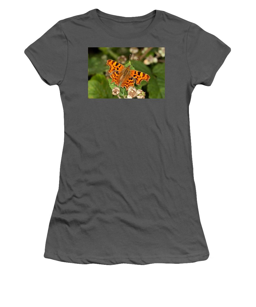 Comma Women's T-Shirt (Athletic Fit) featuring the photograph Comma Butterfly by Bob Kemp