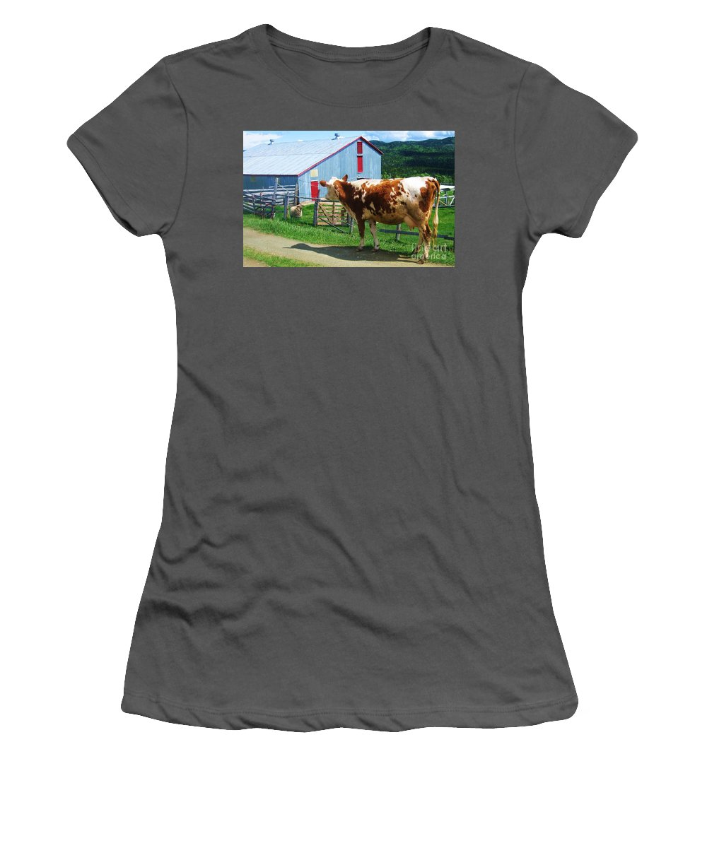 Photograph Cow Sheep Barn Field Newfoundland Women's T-Shirt (Athletic Fit) featuring the photograph Cow Sheep And Bicycle by Seon-Jeong Kim