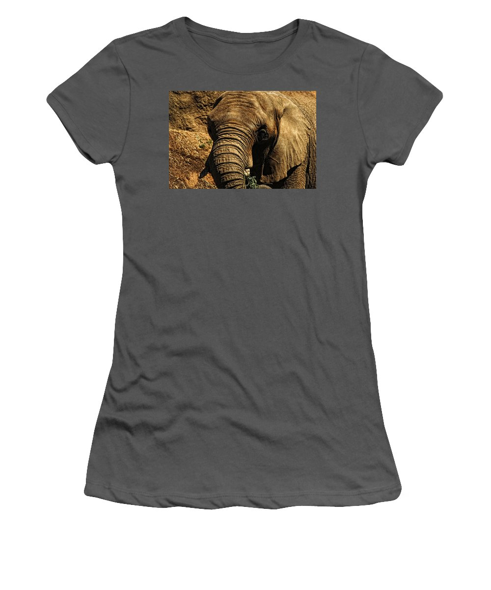 Elephant Women's T-Shirt (Athletic Fit) featuring the photograph Disappearing Elephant by Donna Blackhall