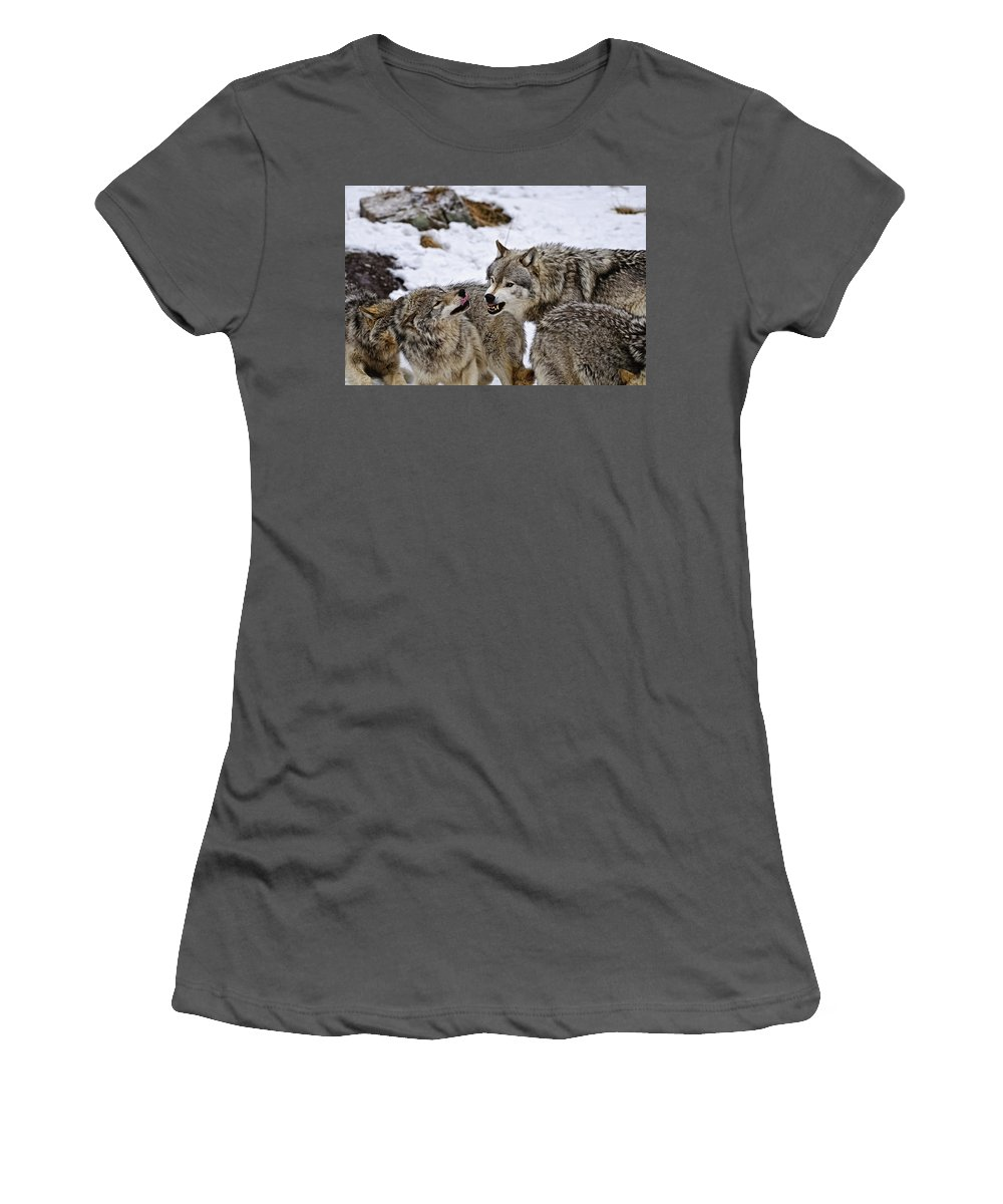 Michael Cummings Women's T-Shirt (Athletic Fit) featuring the photograph Do I Have Your Attention Now by Michael Cummings