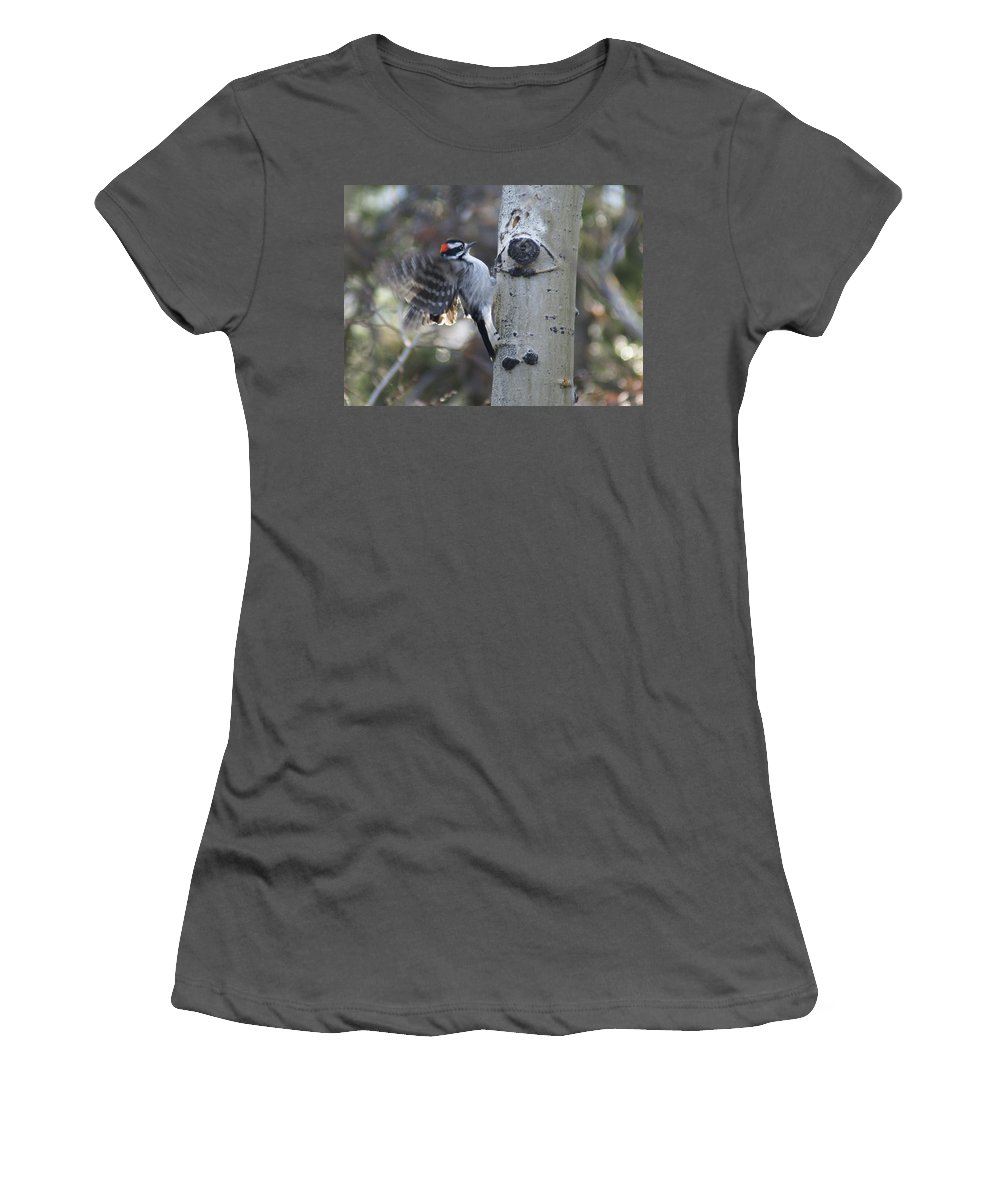 Woodpecker Women's T-Shirt (Athletic Fit) featuring the photograph Downy Woodpecker by Heather Coen