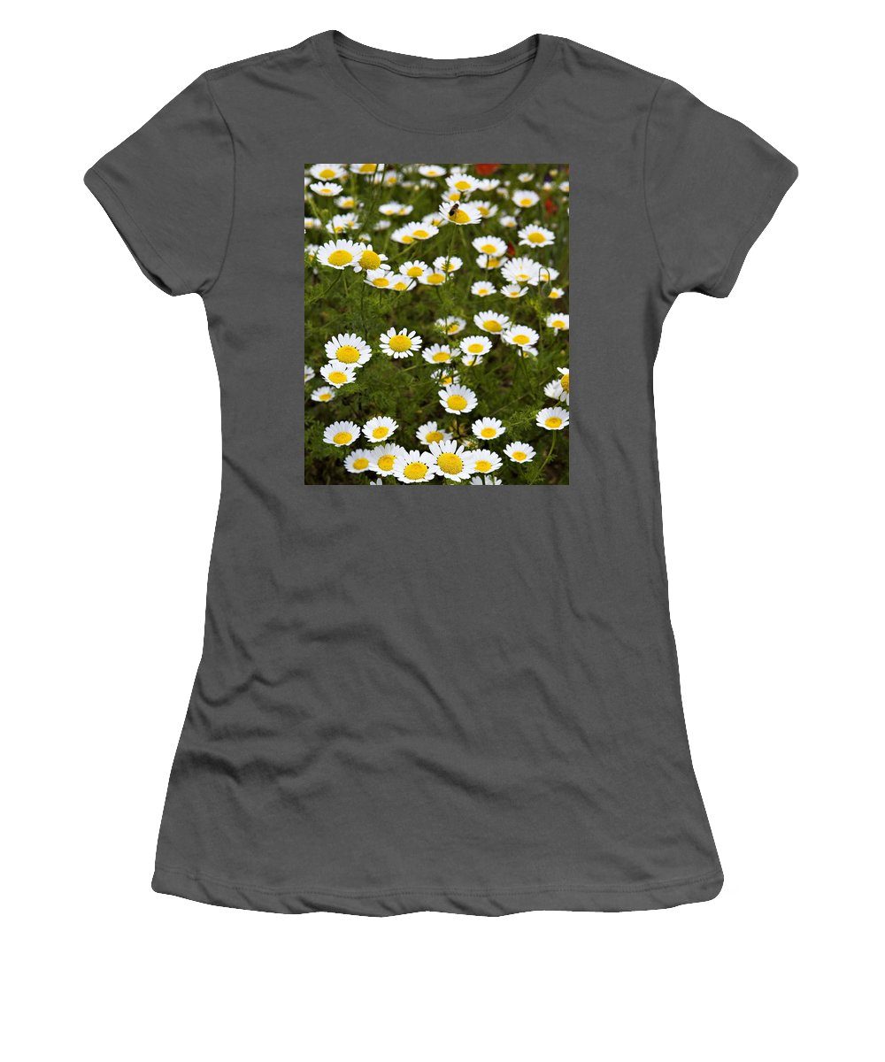 Daisy Women's T-Shirt (Athletic Fit) featuring the photograph Dozens Of Daisies by Marilyn Hunt