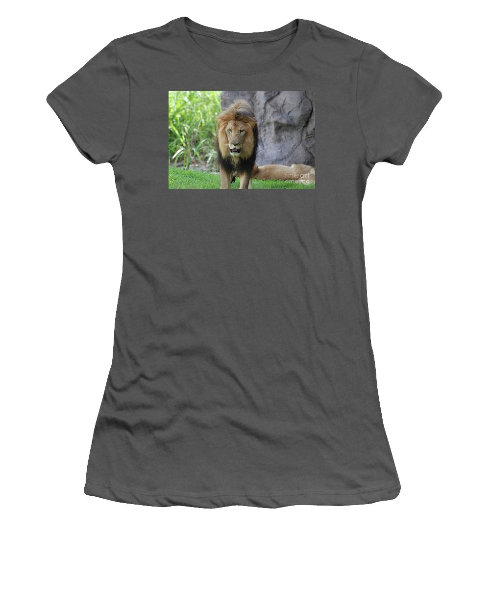 Lion Women's T-Shirt (Athletic Fit) featuring the photograph Expressive Male Lion Prowling Around In Nature by DejaVu Designs