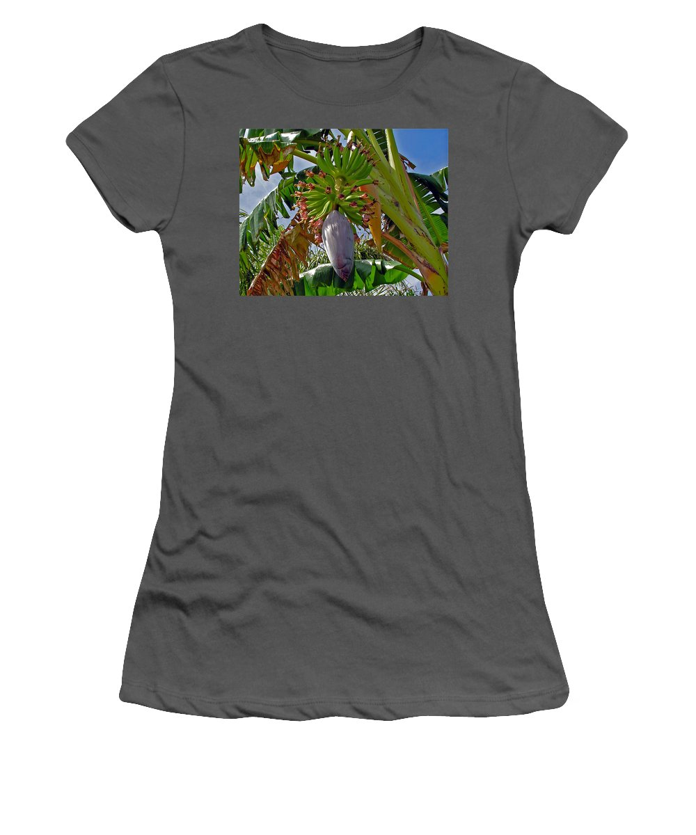 Banana; Bunch; Fruit; Flower; Tree; Stalk; Growing; Florida; Melbourne; Beach; Hand; Baby; Green; Le Women's T-Shirt (Athletic Fit) featuring the photograph Florida Banana Flower And Fruit by Allan Hughes
