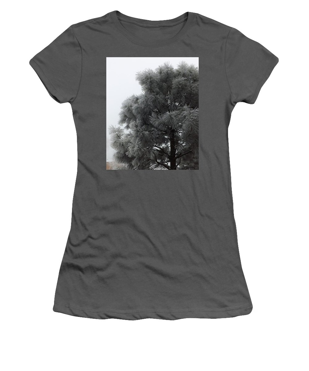 Tree Women's T-Shirt (Athletic Fit) featuring the photograph Frosted Pine by Juanmanuel Ortega